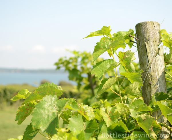 greenvale winery rhode island store