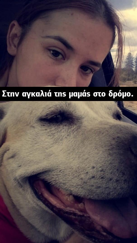σκυλίτσα γέρικη σκυλίτσα