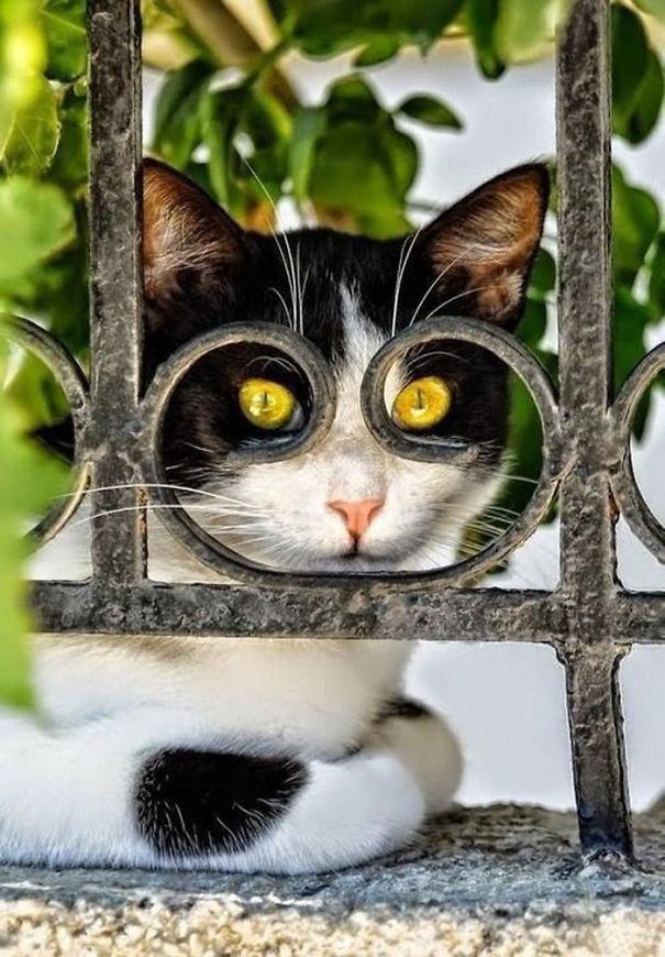 omorfos-kosmos.gr - 22 φωτογραφίες με γάτες που τραβήχτηκαν την κατάλληλη στιγμή