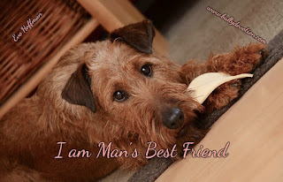 I am Man's Best Friend I am Man's Best Friend Loyal to death...