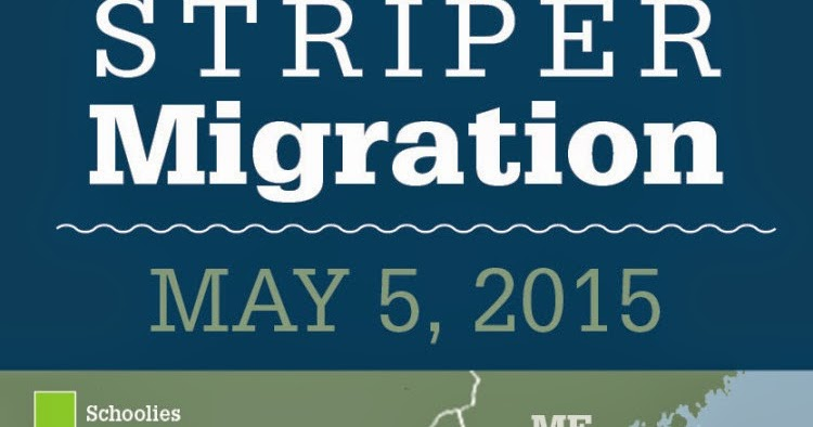 Tight Lined Tales of a Fly Fisherman: Striper Migration Map