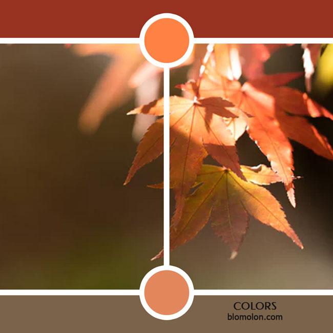 variedad_en_color_color_25