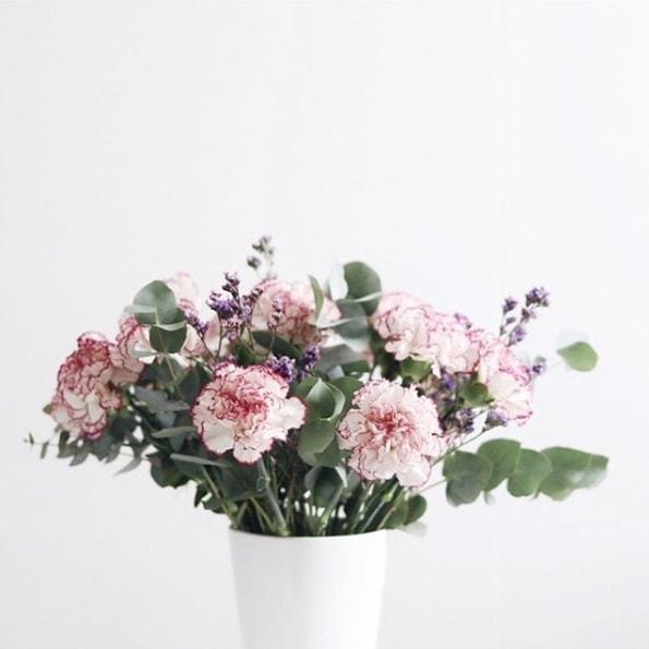 thecolvinco-blog-oliandmoli-7-plantas-navideñas