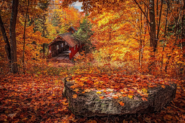 Photo of Fall leaves and woods