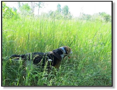 Bei Hitze mit dem Hund lieber Schattenplätze aufsuchen