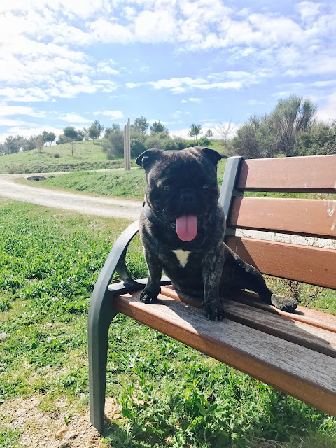 Parque Felipe VI Madrid con perro