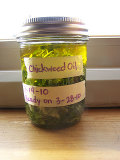 Here's how to make chickweed salve from this common herb growing in your yard!