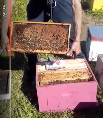 Στο μελισσοκομείο του Στέργιου Στεργάτου μαζί με τον Γιάννη Λύτρα VIDEO