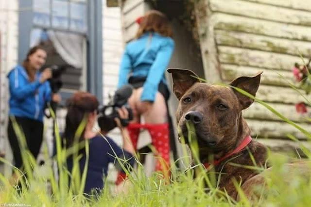chien devant porno