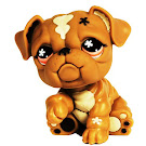 Littlest Pet Shop Singles Bulldog (#719) Pet
