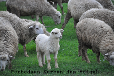 Perbedaan Kurban dan Aqiqah yang Wajib Anda Ketahui