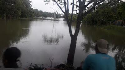 1,7 Ribu Hektar Sawah Rusak Akibat Banjir di Tempuran