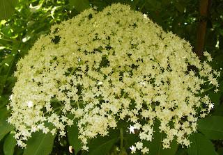 Floare de soc reteta,