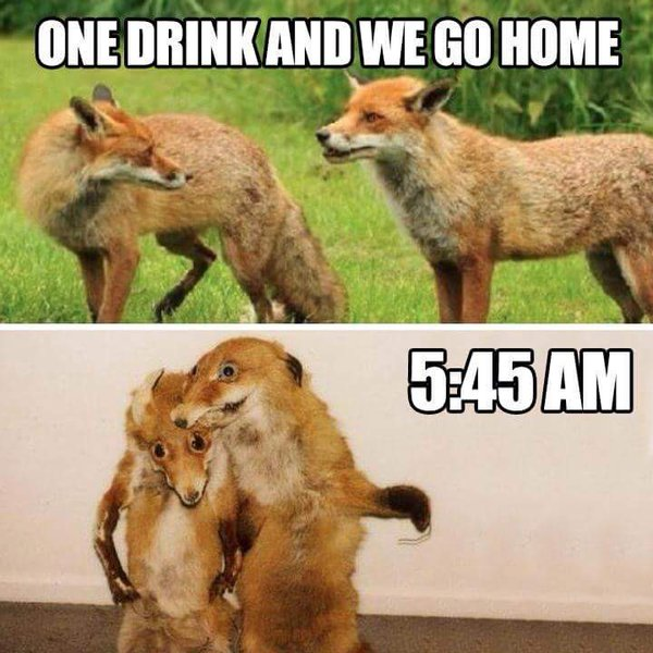 Funny One Drink Go Home Foxes Meme Joke Picture