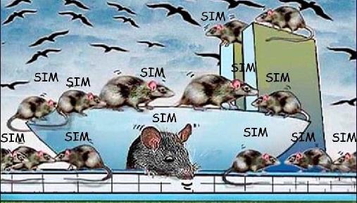 Resultado de imagem para ratos no congresso nacional