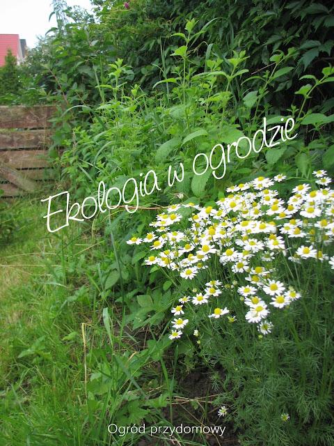 ekologia, ogród, eko ogród