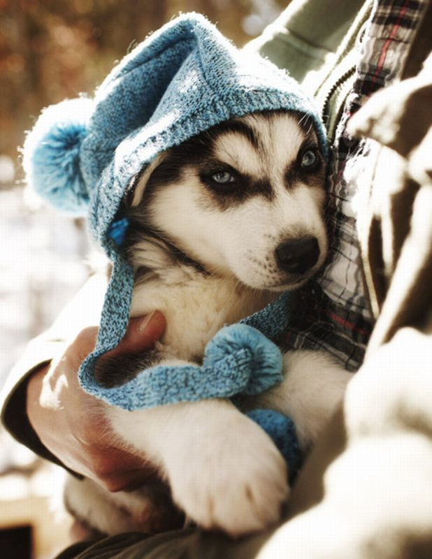 30 Cute Summer Outfits For Teen Girls: Cute Puppy Pictures (30 Pics)