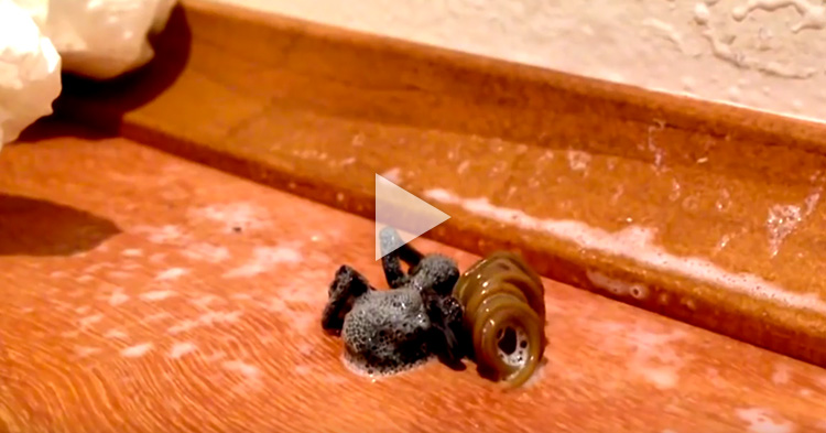 Giant Parasite crawl out of dead Spider after being sprayed by Insect Killer