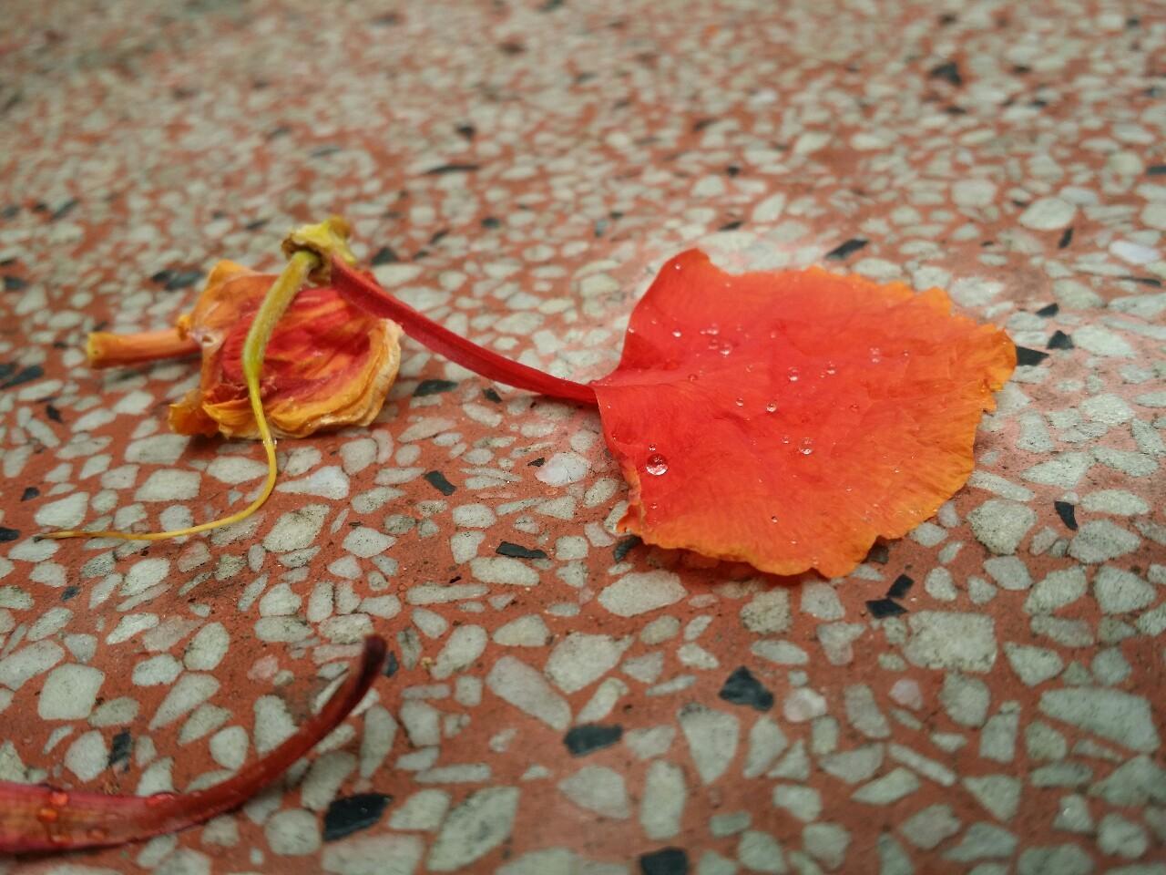 Thơ Về Hoa Phượng, 15+ Bài Thơ Ngắn Hay Viết Về Mùa Hoa Phượng Vĩ