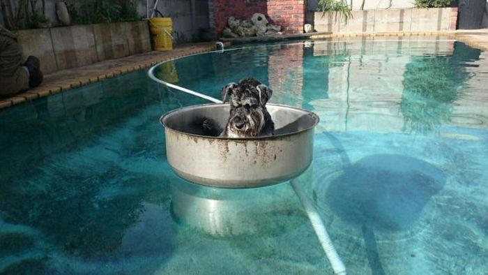 Cute dogs- part 188, funny dog images, cute dog photo, best cute dog
