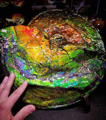 An ammolite gemstone is a fossil ammonite.