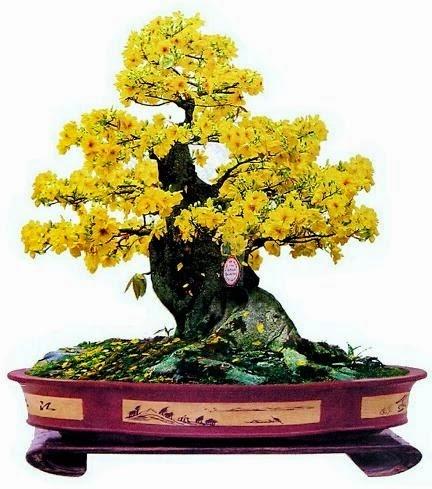 Bonsai tree industry