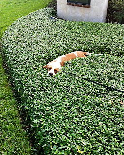 Surrounded On Three Sides Using Your Dog As A Lawn Ornament
