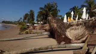 Deslizamento de terra provoca derrubada de coqueiros na praia de Guarajuba