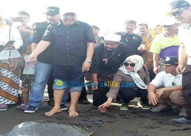 Wabup Pangandaran Pimpin Pelepasan Penyu di Pantai Batuhiu