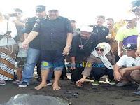 Wabup Pangandaran Pimpin Pelepasan Penyu di Pantai Batu Hiu