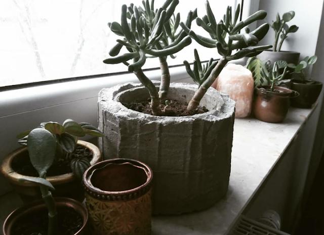 mieszkanie roślinne