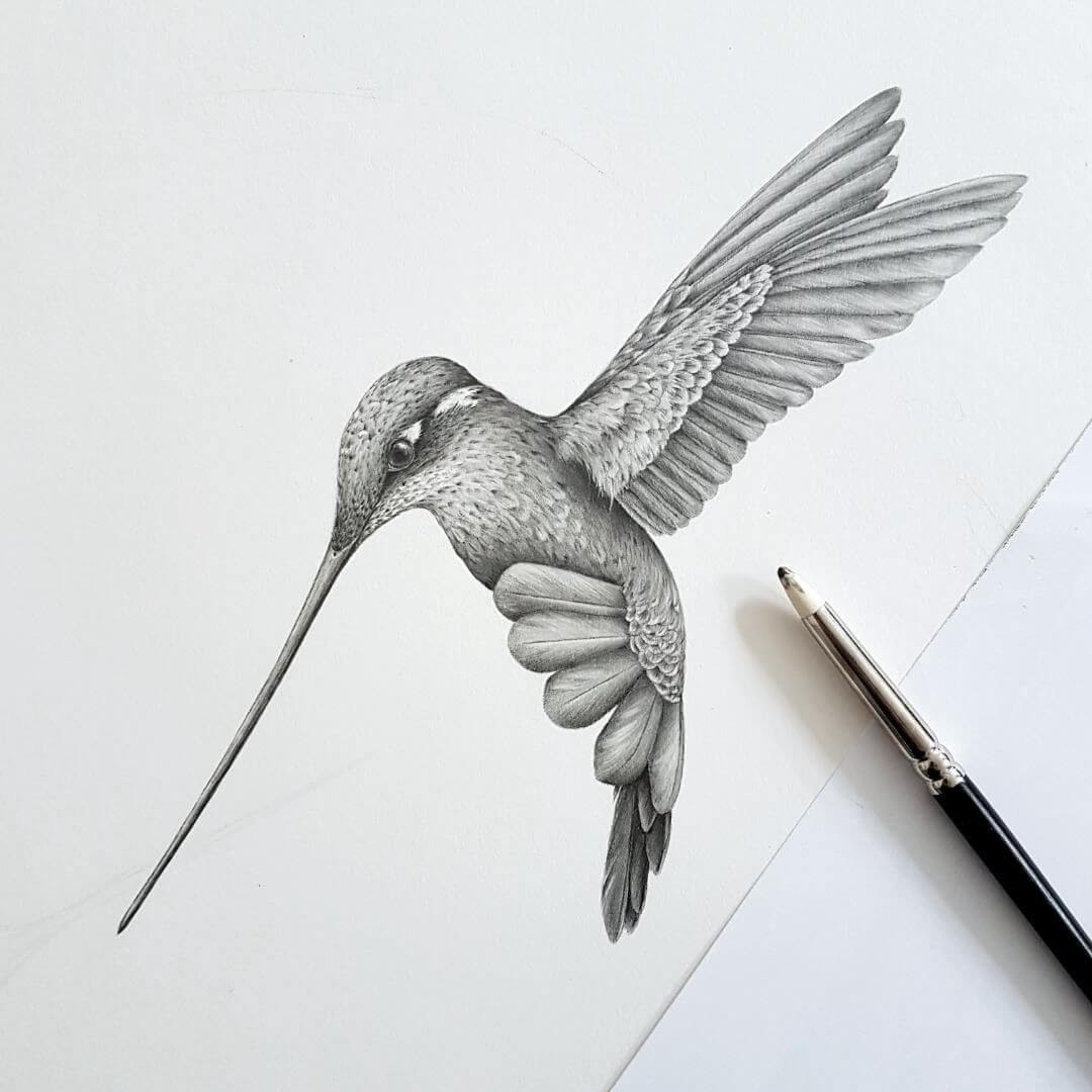 10-Hummingbird-Kerry-Jane-Detailed-Black-and-White-Wildlife-Drawings-www-designstack-co