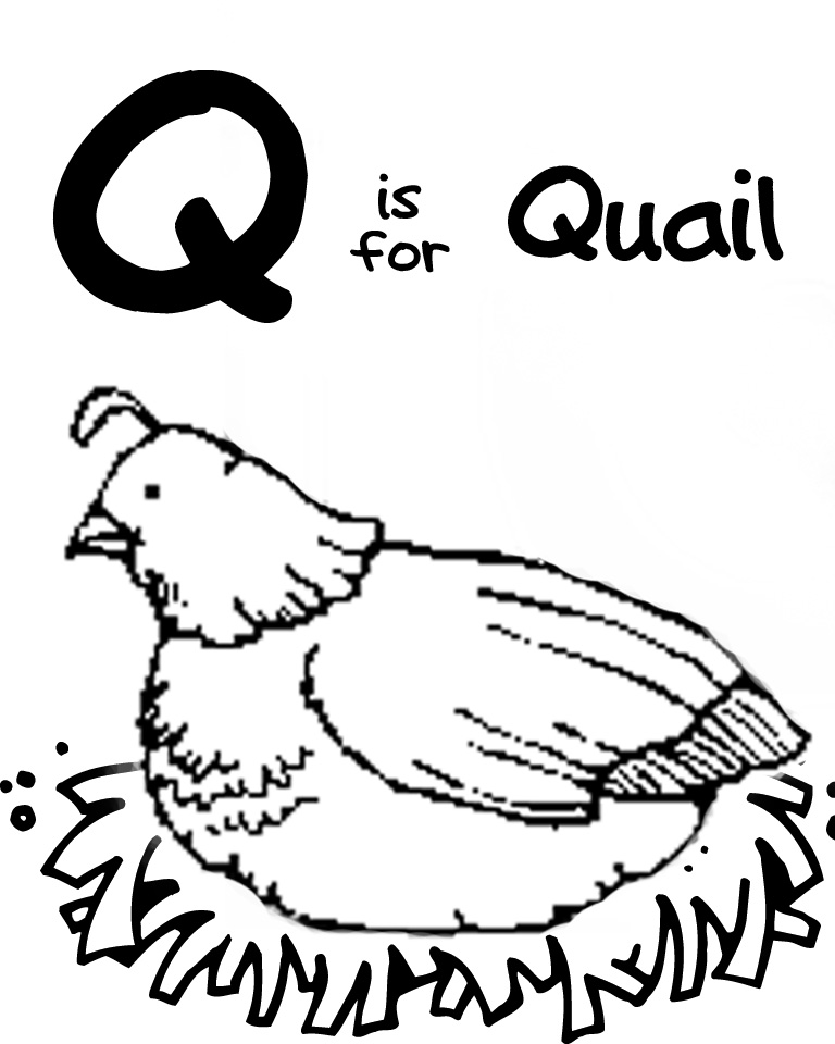 quail coloring page - we love being moms letter q quail