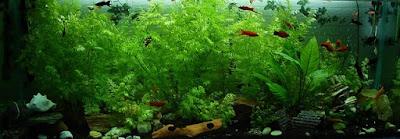 Acuario con Plantas