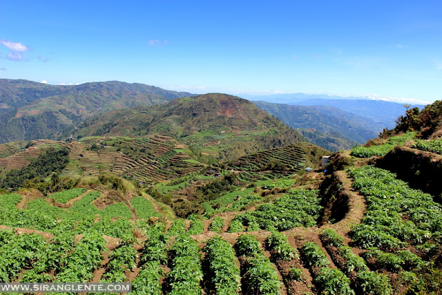 flower farms in Benguet