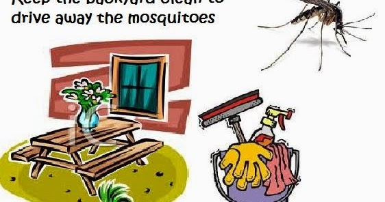 Natural Remedy to Get Rid of Mosquitoes: Keep the Backyard ...