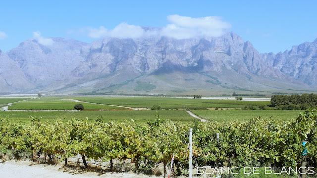 Vuoden kohokohdat: Etelä-Afrikka - www.blancdeblancs.fi