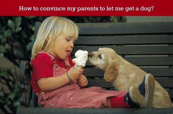 How to Persuade Your Parents to Get a Dog