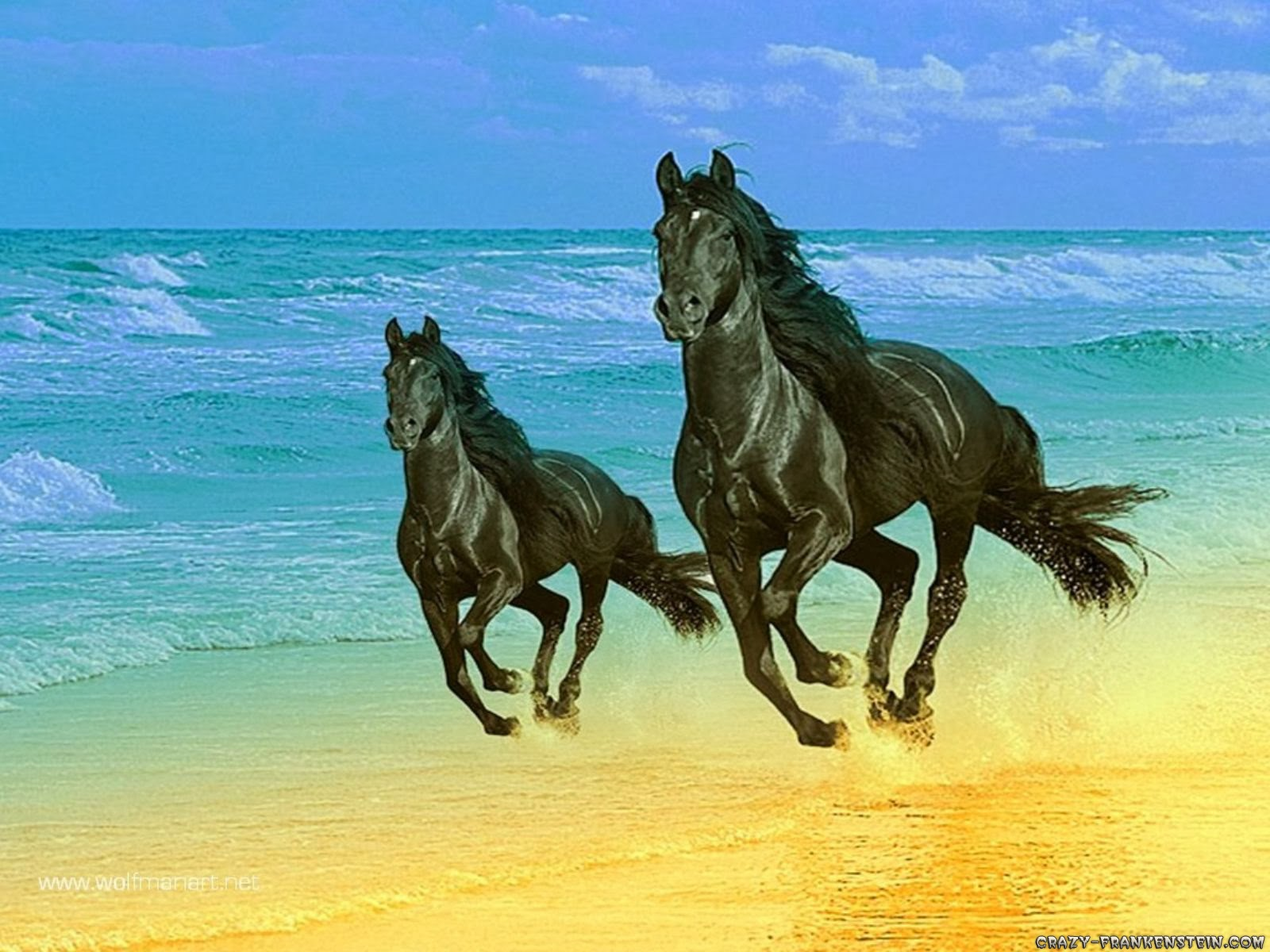 Horse HD Funny Wallpapers ~ Funny Wallpapers