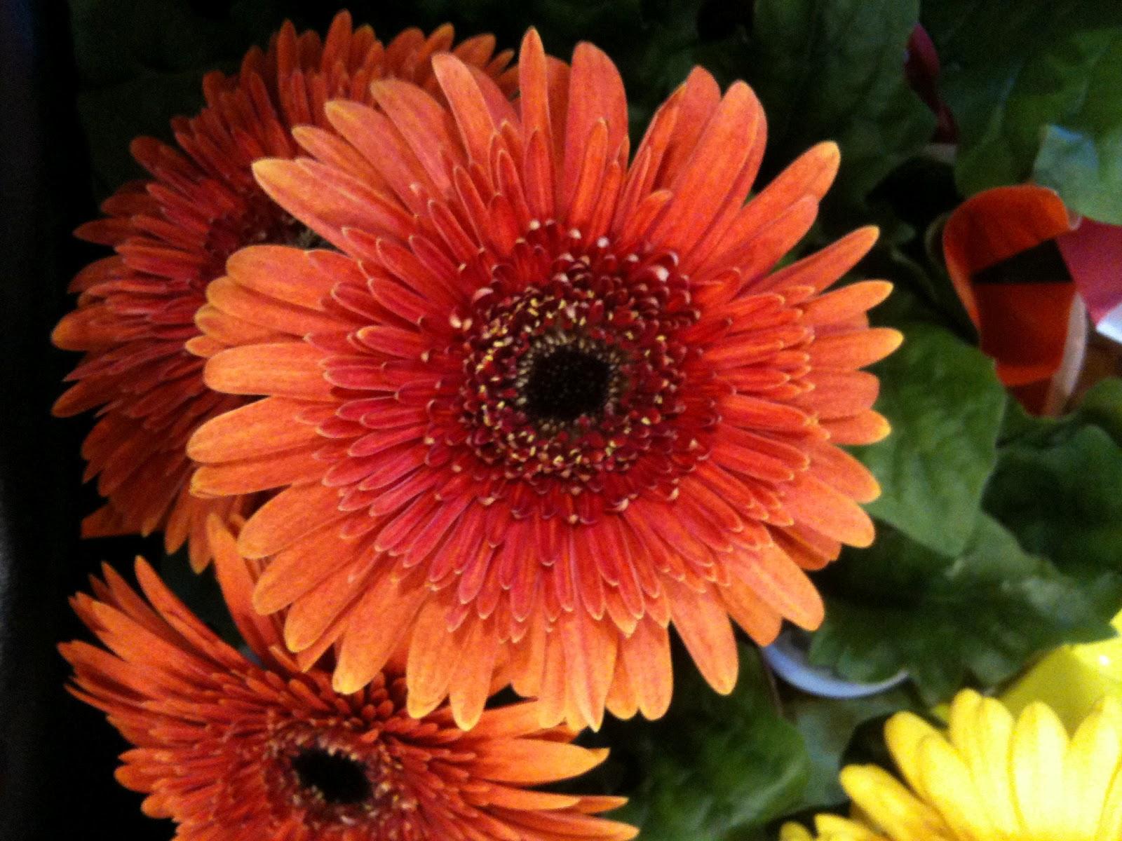The Helpful Art Teacher A Garden Of Flowers Blending