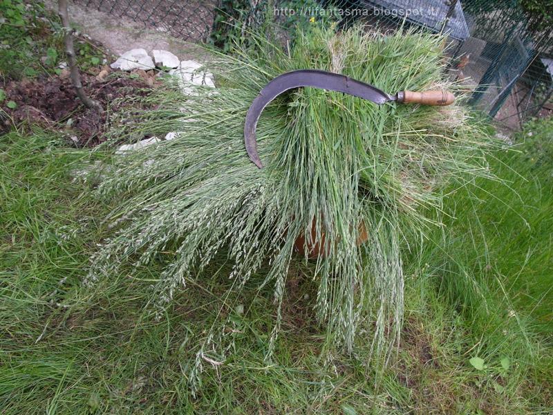 Le avventure della mia fantasia tagliare erba con il falcetto for Erba per prato che non si taglia