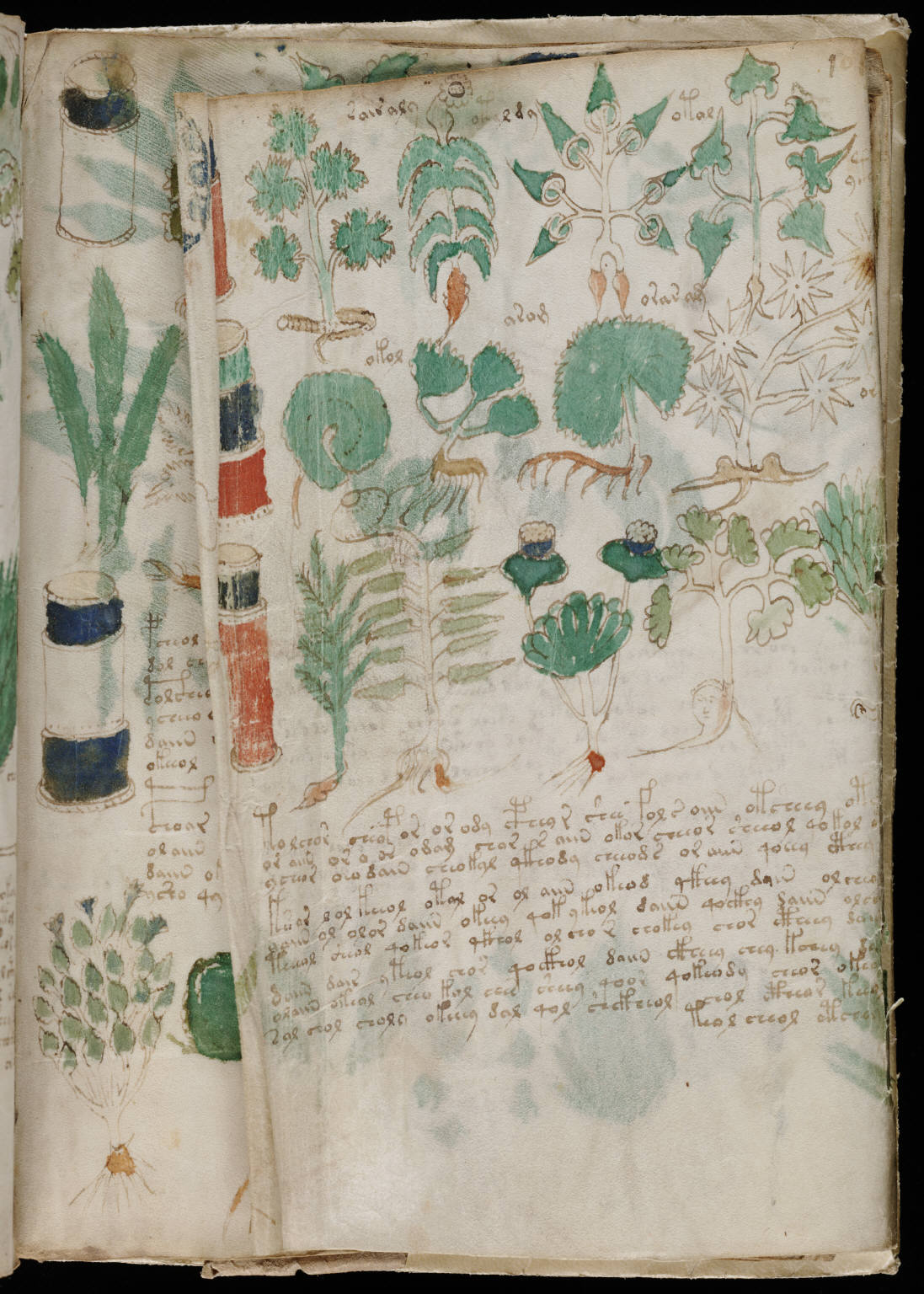 manuscrito177