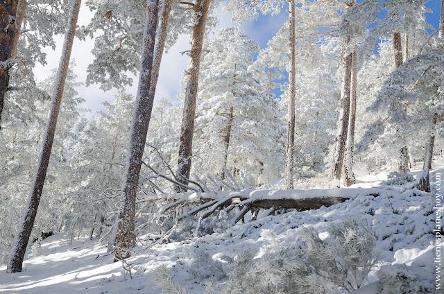 Ruta raquetas nieve planes Madrid naturaleza Cotos Valdesquí