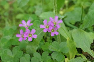 等々力渓谷では、珍しい花々が咲いていました。