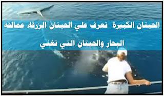 الحيتان الكبيرة  تعرف علي الحيتان الزرقاء عمالقة البحار والحيتان التي تغني