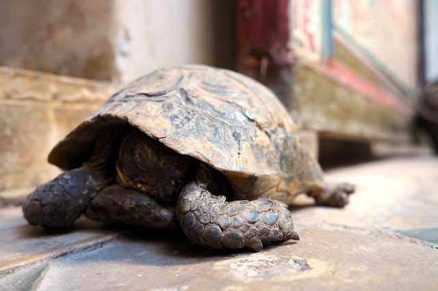 tortoise at riad karmela Marrakech Photo Diary