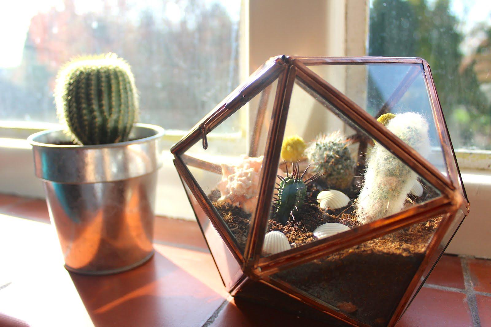 Diy Cacti Succulent Terrarium Fatima Writes Lifestyle Blog