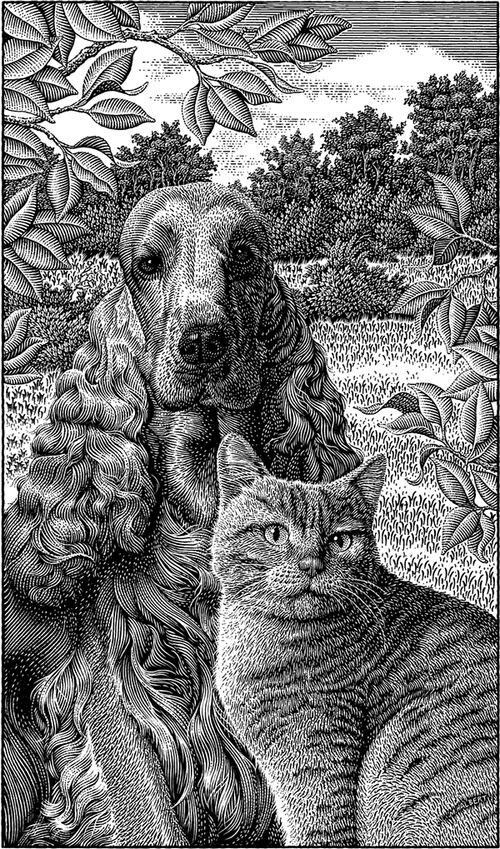 19-Cocker-Spaniel-and-a-Cat-Michael-Halbert-Scratchboard-Images-of-Animals-and-Architecture-www-designstack-co