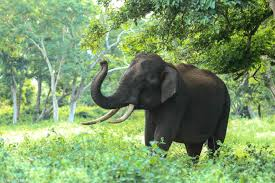 THE ELEPHANT'S TRUNK,THE ELEPHANT'S TRUNK STORY, ELEPHANT'S TRUNK,ELEPGANT,story,story writing,story of my life,story for kids,story books,storyboard,story for children,story in english,story cartoon,story of my life lyrics,english,,smart Learning with me