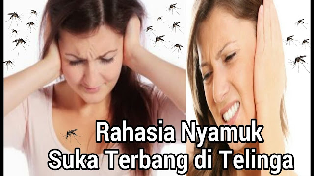 Ada Yang Tau? Apa Penyebab Nyamuk Suka Terbang Dekat Telinga?